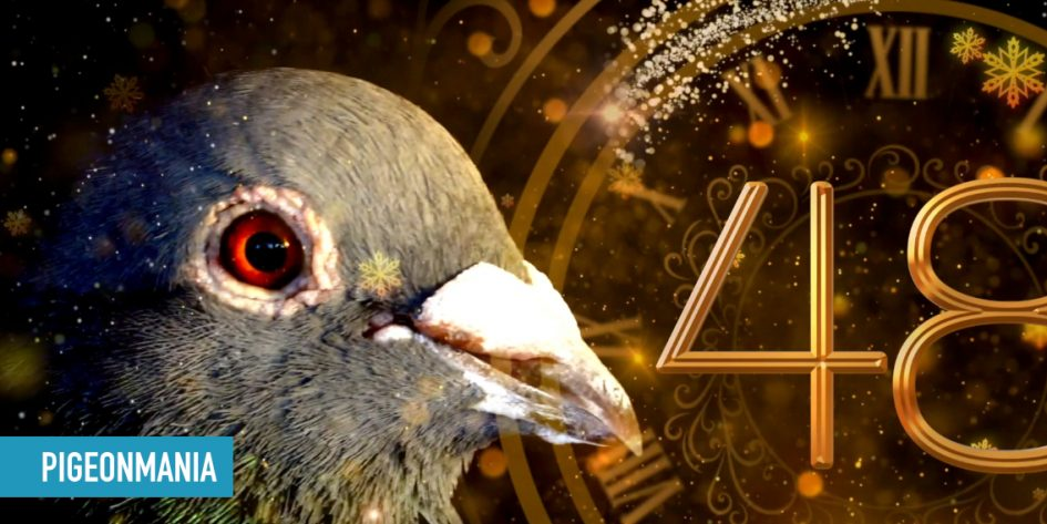 Happy New Year - Pigeonmania